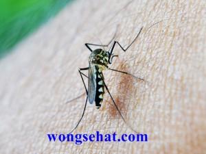 Cara Alami Mengobati Malaria