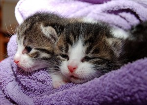 10 Alasan Kenapa Kamu Harus Memelihara Kucing