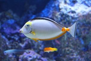 Lebih Sehat dengan Melihat Ikan, Ini Penelitiannya