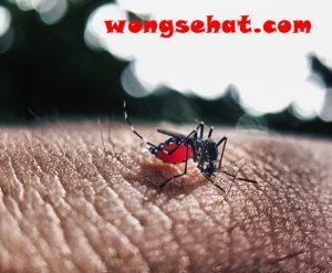 Kenali Gejala Demam Berdarah Dan Cara Pencegahannya